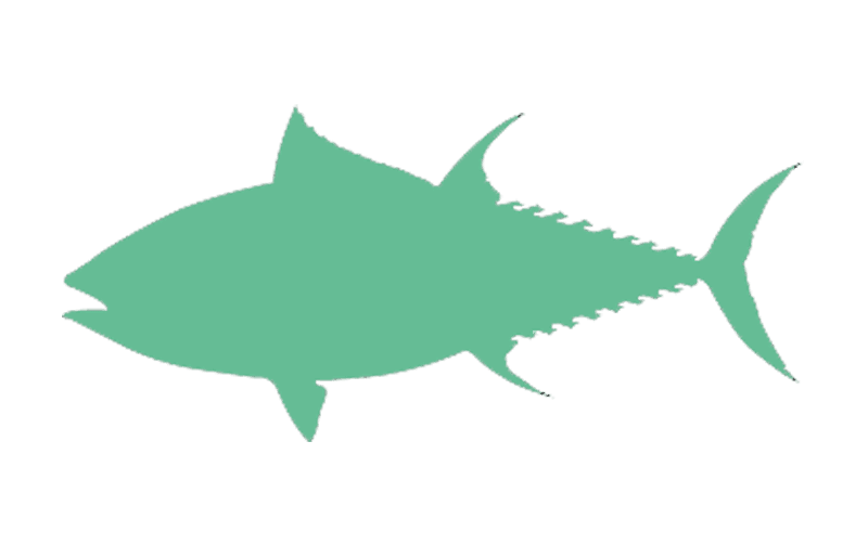 The Bluefin Package | Marketing Packages | Big Marlin Group